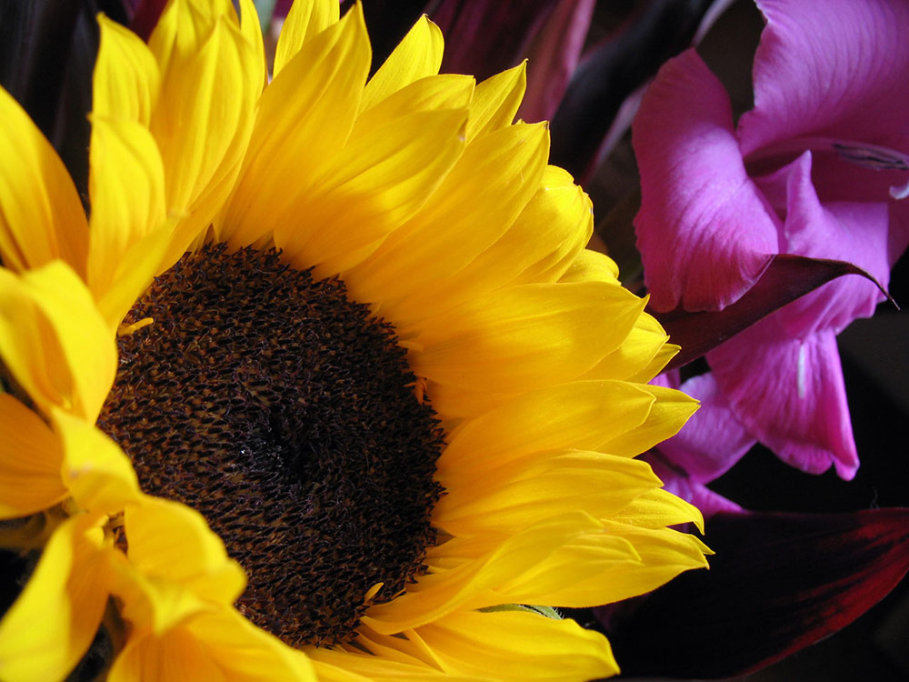Sunflowers contrast well with purples and blues
